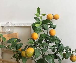 citrus, fresh, and healthy image