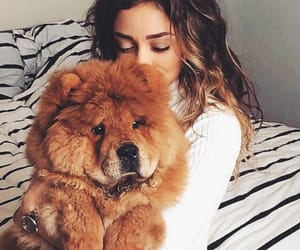 dog, animal, and bear image