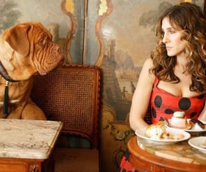 dogs, sarah jessica parker, and sex and the city image