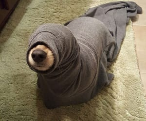 dog, funny, and seal image