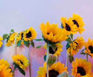 Seventeen, flowers, and sunflower image