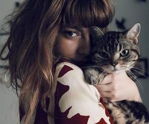 Animais, animals, and Gatos image
