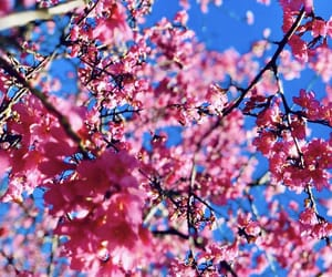 background, blossom, and blue sky image