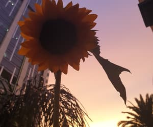 aesthetic, sunflower, and sunset image