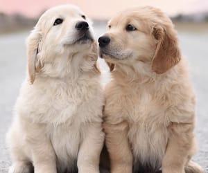animals, cutie, and dog image