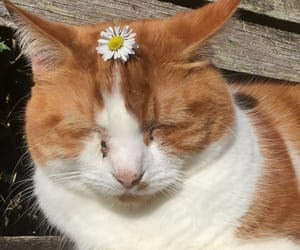 cat, daisy, and flower image
