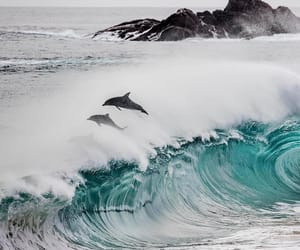 dolphin, ocean, and photography image