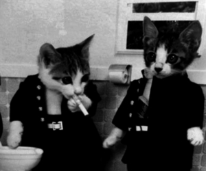 cat, black and white, and smoke image