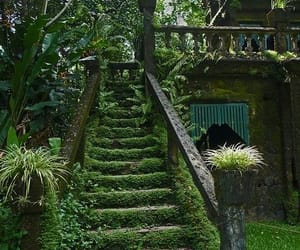 garden, nature, and green image