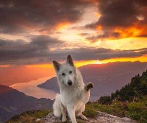 dog, adventure, and travel image