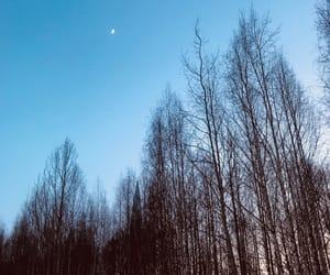forest, moon, and russia image