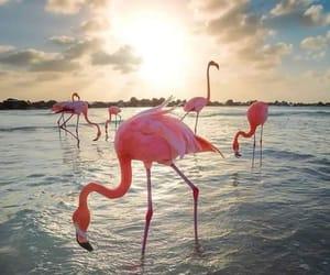 animals, water, and flamingo image