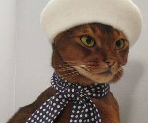 beret, cat, and fashion image