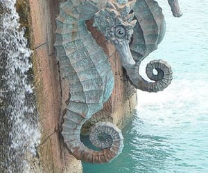 ocean, seahorse, and water image