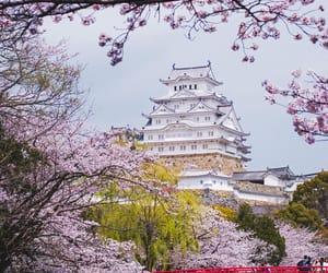 boat, sakura, and さくら image