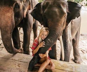 animal, girl, and elephant image