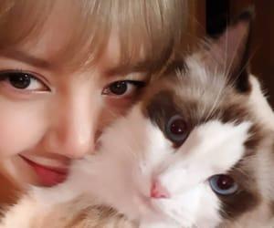 blackpink, lisa, and cat image