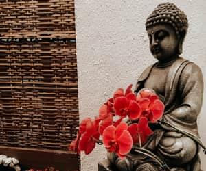 flower, zen, and buda image