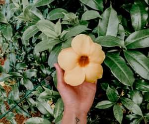 girl, vintage, and flower image