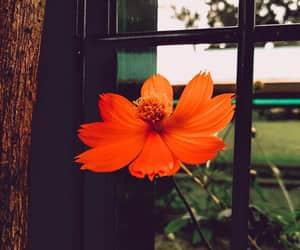 flower, orange, and plant image
