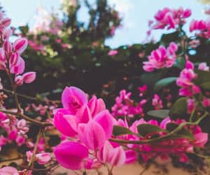 flower, plant, and pink image
