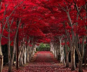 nature, travel, and red image