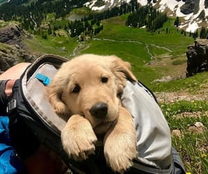 puppy, dog, and travel image
