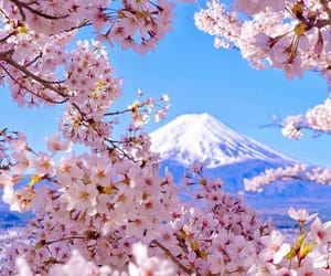 beautiful, flowers, and blossom image