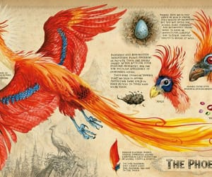 bird, book, and harry potter image