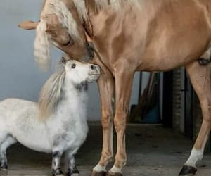 friendship, love, and horse image