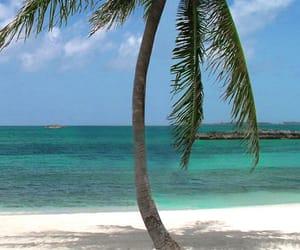 bahamas and Caribbean image