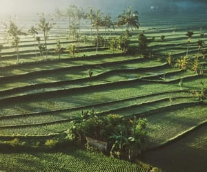 adventure, bali, and fields image