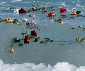 flowers, ocean, and rose image