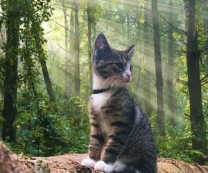 adventure, animal, and cat image