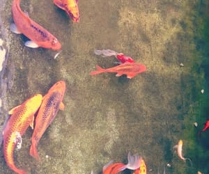 art, fishes, and nature image