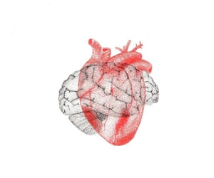 brain, red, and heart image
