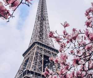 bloom, blossom, and paris image