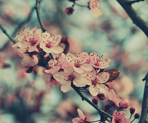 blossom, flowers, and photography image
