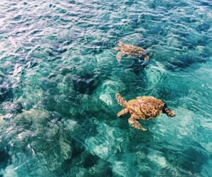 ocean, turtle, and blue image