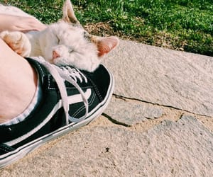 cat, vans, and aesthetic image