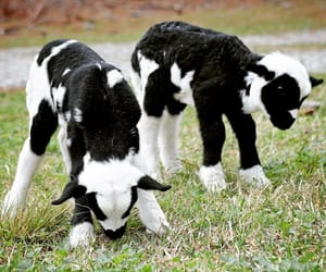 animals, country living, and farm image