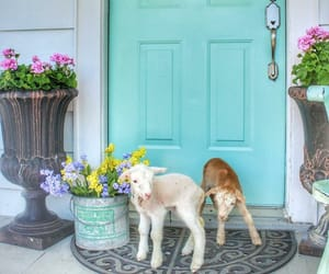country living, door, and farm image