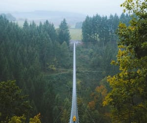 nature, travel, and forest image