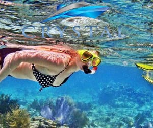 tour, travel, and snorkelling image