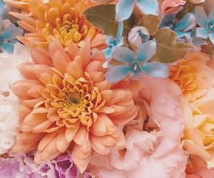 beautiful, flowers, and flowerstagram image
