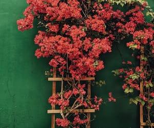 beautiful, botanical, and flower image