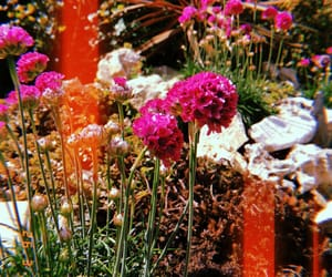 flower, flowers, and garden image