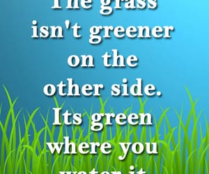 funny, grass, and greener image