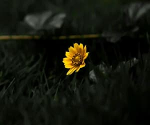 flower, nature, and tumblr image
