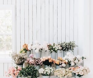 flowers, rose, and inspiration image